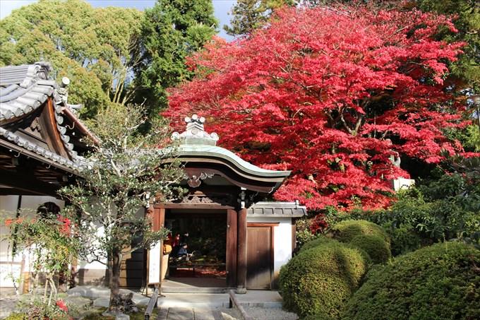 66栄摂院の見事な紅葉