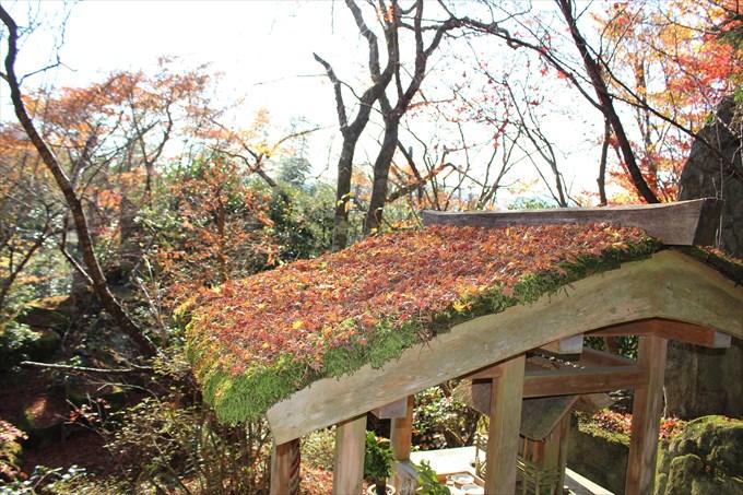 47宝楽園の社の屋根の紅葉