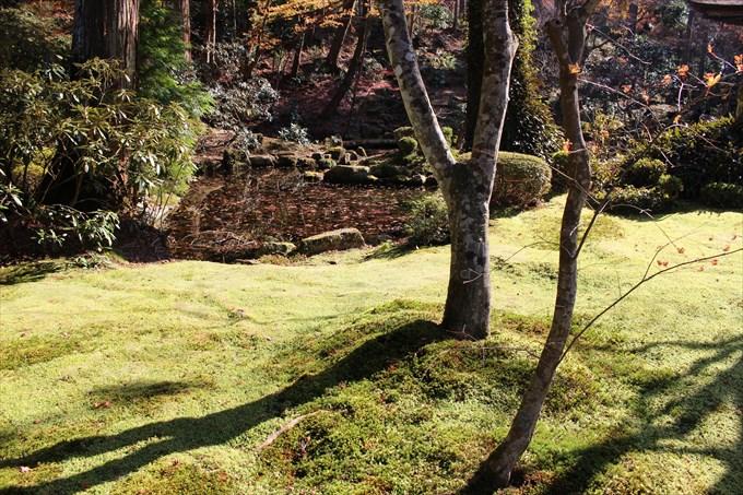 34有清園の池