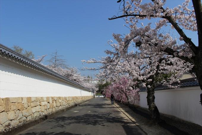 2勧修寺の参道と築地塀
