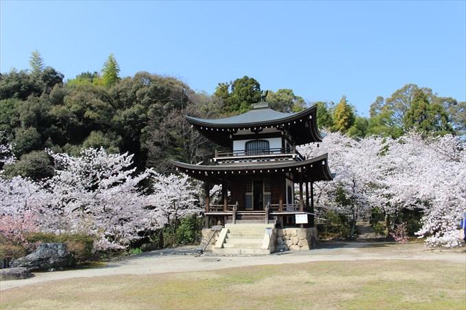 24勧修寺の大悲閣と桜