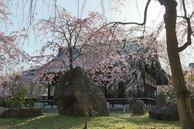 19桜園から大書院を撮影