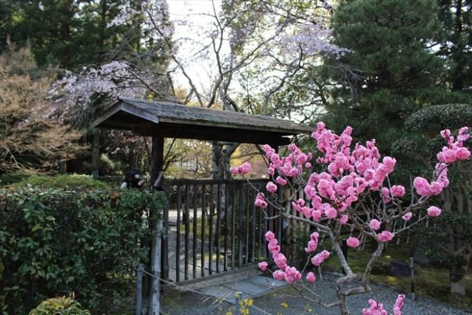 14梅園の門(裏口)
