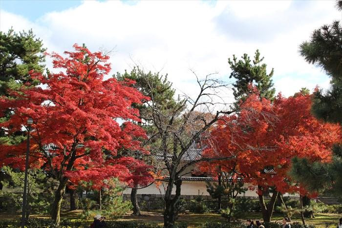 19法堂の東側の紅葉