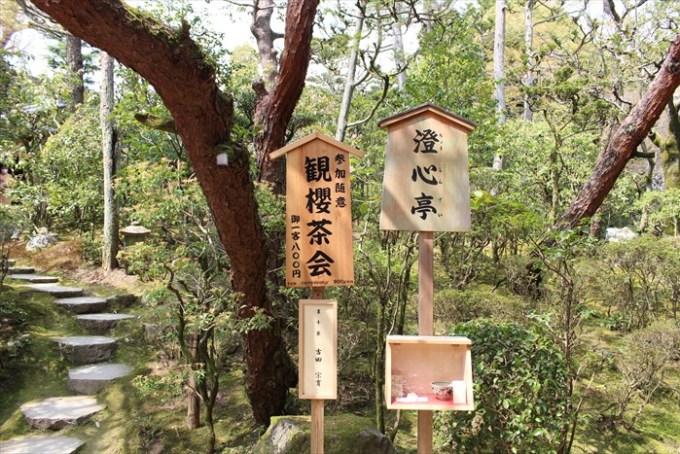 20.澄心亭で観桜茶会をやっていました