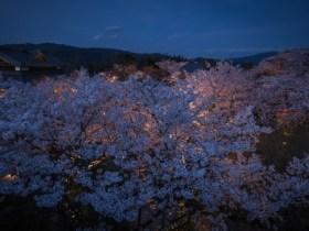 将軍塚青龍殿桜ライトアップ