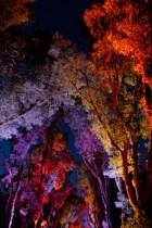 府立植物園紅葉ライトアップ