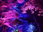 糺の森の光の祭