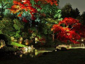 青蓮院紅葉ライトアップ