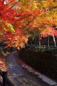 北野天満宮紅葉