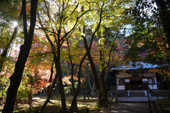 地蔵院紅葉