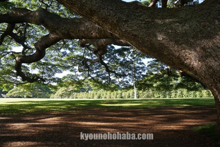 この木なんの木 モアナルア ガーデン