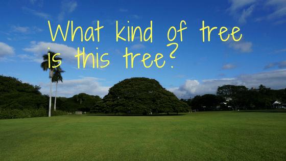 木 なん この 木 の