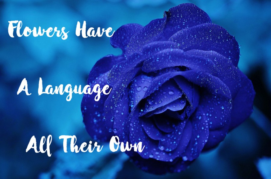flowers-have-a-language-all-their-own-kyra-dawson-blog.jpg