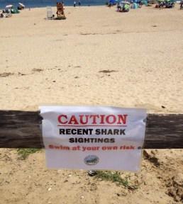 caution sharks