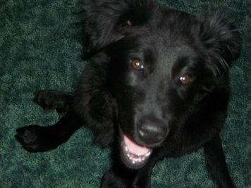 Belle, 4 months