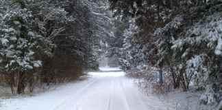 snow, track, trees