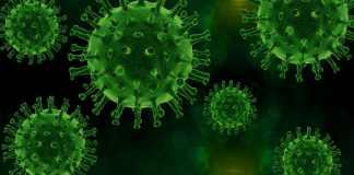 virus, pathogen, infection