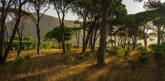 forest-dasos