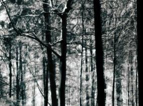 Wald_von_Ennor11