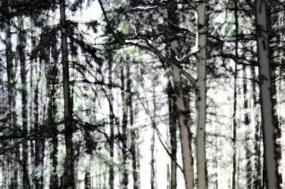 Wald_von_Ennor20