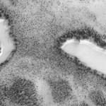 NASAもびっくり!?火星で「湖」を発見か!?