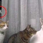 【閲覧歓迎】背筋がまったく凍らない『猫の心霊写真』