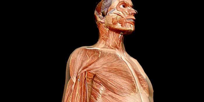 Arm Paralysis Incapacitation