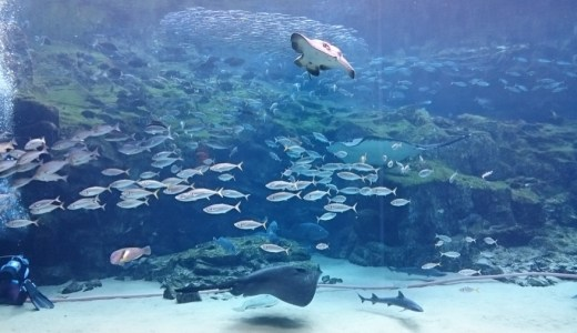 參觀九十九島的海洋生物 - 九十九島水族館 海きらら(KIRARA)