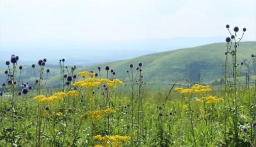欣賞世界罕見的野草與阿蘇靚景 - 阿蘇肥後躰公園