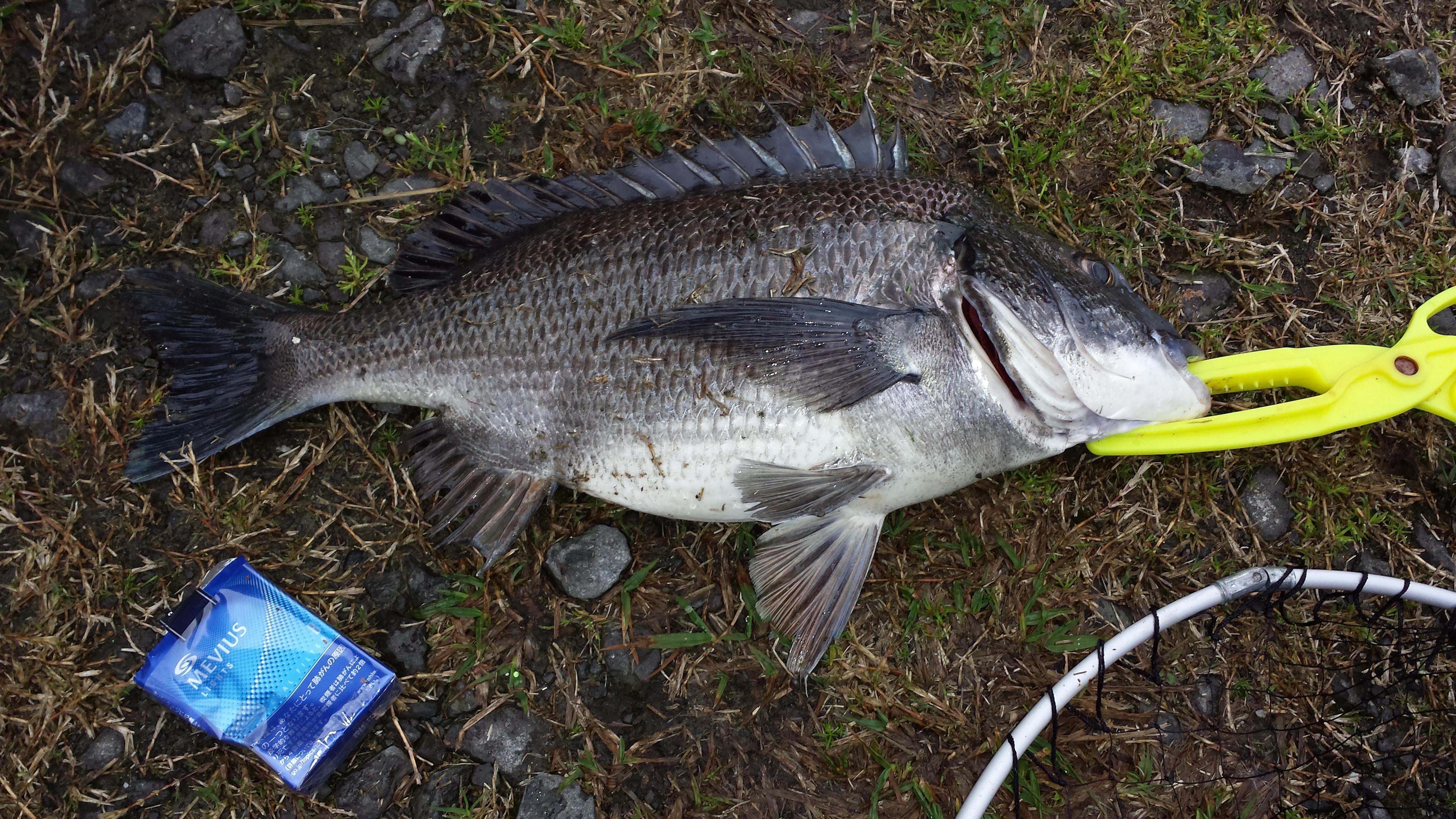 ふかせ釣りにはまってしまった記憶。それは2014年であった。