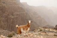 Oman 2012 484.JPG