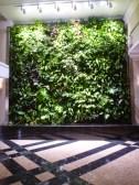 Green wall dans l'entrée.JPG