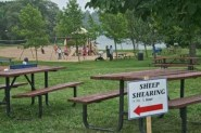 17 Sheep-Dog-Trials-in-Kingston-3-torontofunplaces.com.jpg