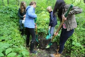 TFS_4294 - Les élèves plantent l'érable à sucre.JPG