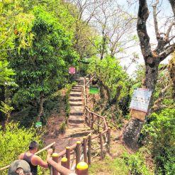 Sentier du Parque El Boquerón (photo Lucie Lacombe)_CMYK.jpg