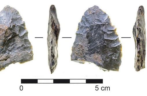 Des outils de pierre, découverts dans une caverne en Floride, auraient servi à découper du mastodonte, un ancêtre de l'éléphant.