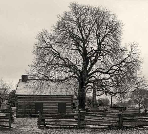 The Scadding Cabin (Photo: Grant MacDonald)