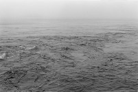 Un cormoran sur l'eau: la seule photo de l'exposition «Aiminanu».