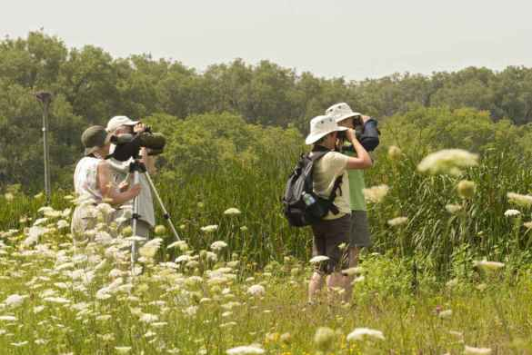 Des observateurs d'oiseaux à Brighton. (Photo: Parcs Ontario)