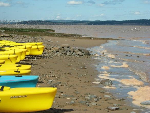 La Baie de Fundy à marée montante, kayaks sur la plage et nuées de bécasseaux à pâtes semi-palmées (Plage Nord).