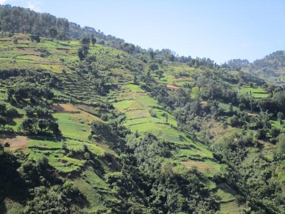 Haïti, terre paysanne.