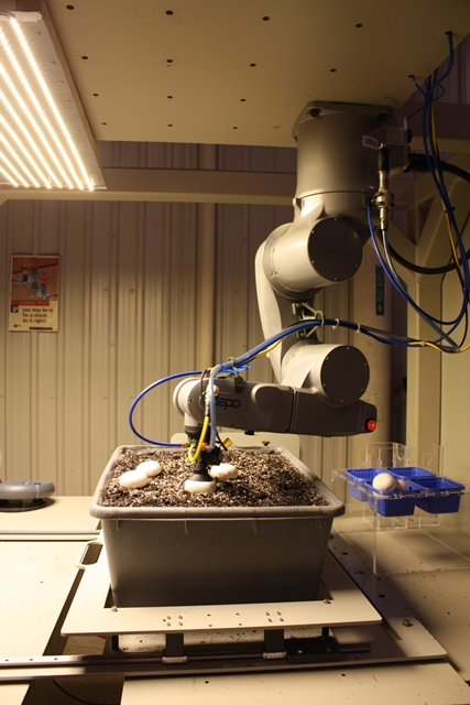 Un robot récolte des champignons.