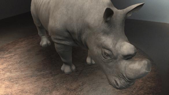 Rhinocéros blanc du Nord