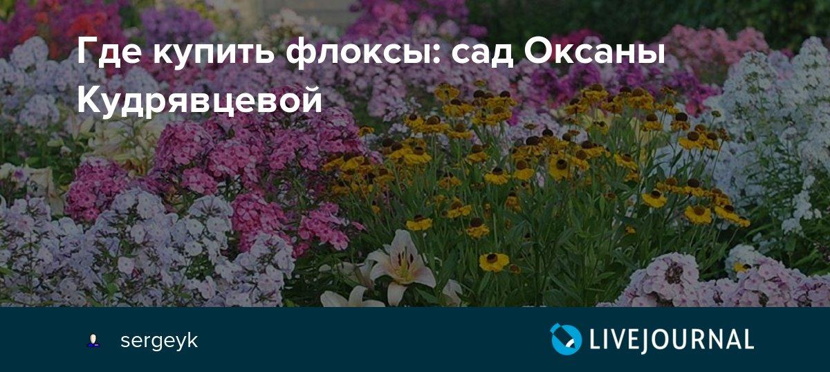 Где купить флоксы: сад Оксаны Кудрявцевой: sergeyk ...