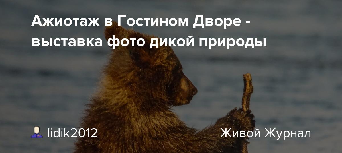 Ажиотаж в Гостином Дворе - выставка фото дикой природы ...