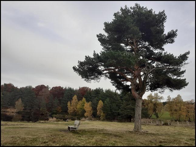 banc arbre