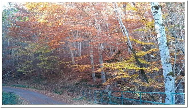 paysage automne amuser