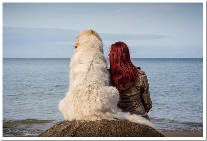 relation animal