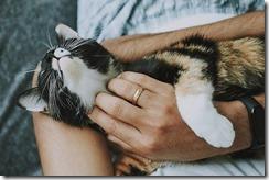 cat-g1cb3f7173_640